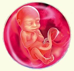 Выделения 17 неделя беременности
